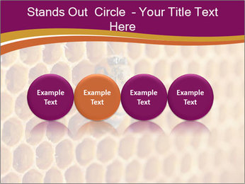 0000073446 PowerPoint Template - Slide 76
