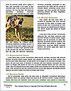 0000073468 Word Template - Page 4