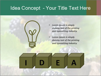 0000073472 PowerPoint Template - Slide 80