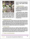 0000073498 Word Templates - Page 4