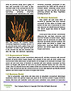 0000073503 Word Template - Page 4