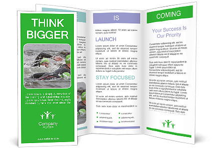 0000073550 Brochure Template