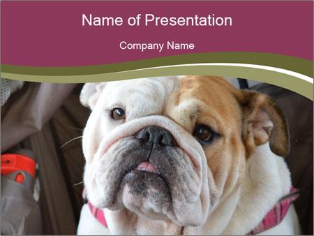 0000073578 PowerPoint Templates