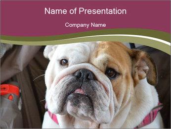 0000073578 PowerPoint Template - Slide 1