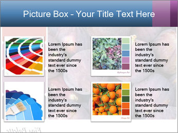 0000073579 PowerPoint Template - Slide 14