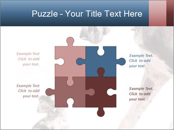 0000073586 PowerPoint Templates - Slide 43
