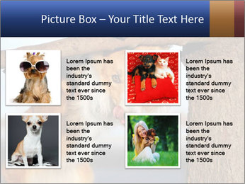 0000073595 PowerPoint Template - Slide 14