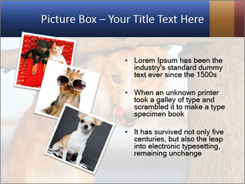 0000073595 PowerPoint Template - Slide 17
