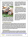0000073609 Word Templates - Page 4