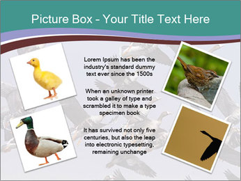 0000073629 PowerPoint Template - Slide 24