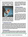 0000073648 Word Template - Page 4