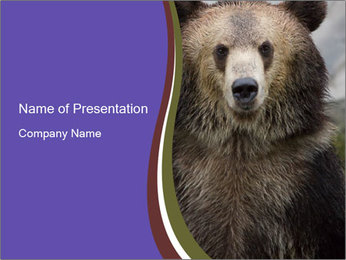 0000073656 PowerPoint Template - Slide 1
