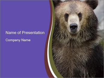 0000073656 PowerPoint Templates - Slide 1