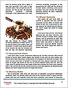0000073779 Word Templates - Page 4