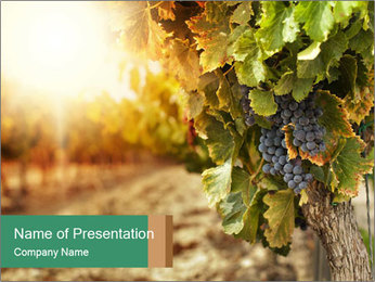 0000073808 PowerPoint Template - Slide 1