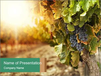 0000073808 PowerPoint Templates - Slide 1
