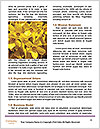 0000073833 Word Templates - Page 4
