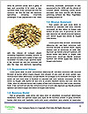 0000073863 Word Template - Page 4