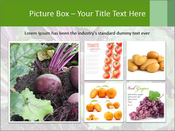 0000073886 PowerPoint Templates - Slide 19