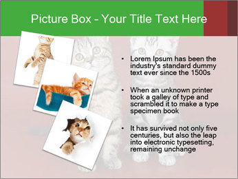 0000073900 PowerPoint Templates - Slide 17