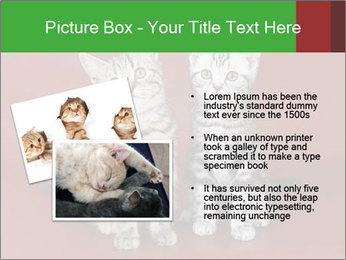 0000073900 PowerPoint Templates - Slide 20