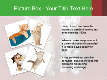 0000073900 PowerPoint Templates - Slide 23