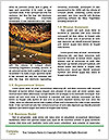 0000073966 Word Template - Page 4