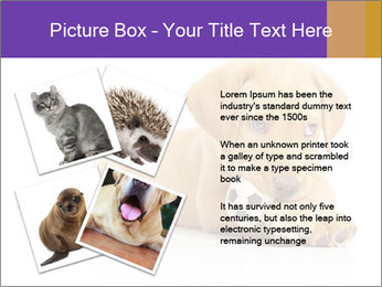 0000074004 PowerPoint Template - Slide 23