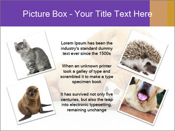 0000074004 PowerPoint Template - Slide 24