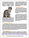 0000074004 Word Template - Page 4