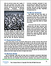 0000074012 Word Template - Page 4