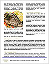 0000074120 Word Templates - Page 4