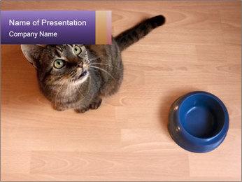 0000074125 PowerPoint Template - Slide 1