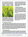 0000074138 Word Templates - Page 4