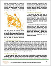 0000074161 Word Template - Page 4