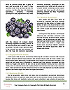 0000074282 Word Templates - Page 4