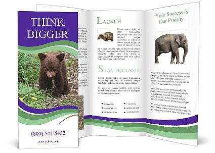 0000074305 Brochure Template