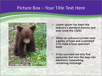 0000074305 PowerPoint Template - Slide 13