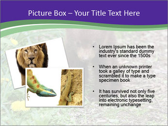 0000074305 PowerPoint Template - Slide 20
