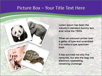 0000074305 PowerPoint Template - Slide 23