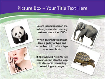 0000074305 PowerPoint Template - Slide 24