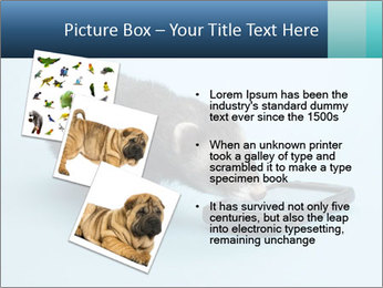 0000074312 PowerPoint Templates - Slide 17