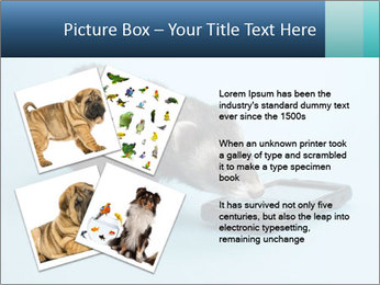 0000074312 PowerPoint Templates - Slide 23