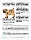 0000074312 Word Templates - Page 4