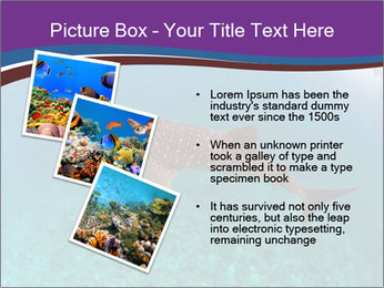 0000074316 PowerPoint Template - Slide 17