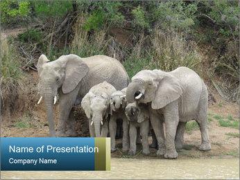 0000074325 PowerPoint Template - Slide 1
