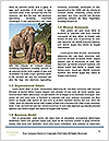 0000074325 Word Template - Page 4