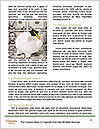 0000074328 Word Template - Page 4