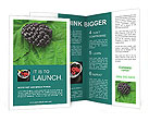 0000074344 Brochure Templates