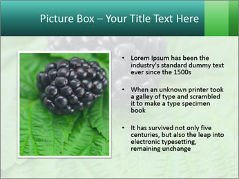 0000074344 PowerPoint Template - Slide 13